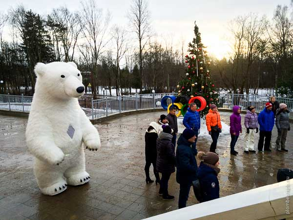Белый медведь в Репино на олимпиаде