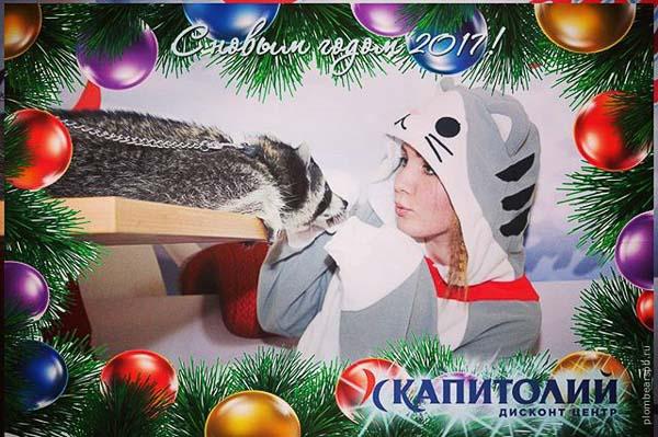 Енот с котом аниматор с животным в Капитолий на Новогодние праздники