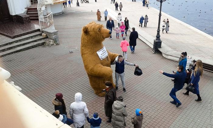 Огромный бурый медведь в центре Севастополя