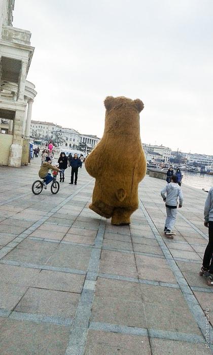 Бурый медведь в Севастополе