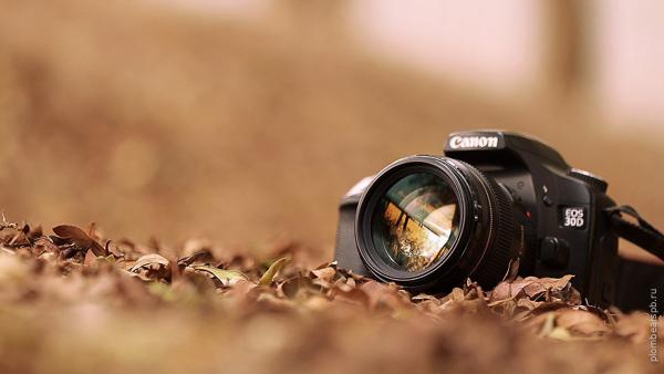 фотоаппарат в листве