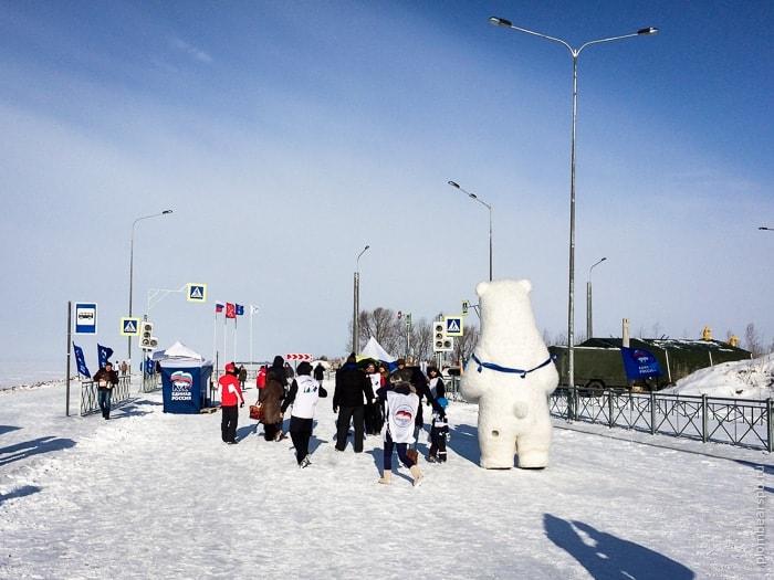 белый медведь на соревновании по зимней рыбалке в Спб