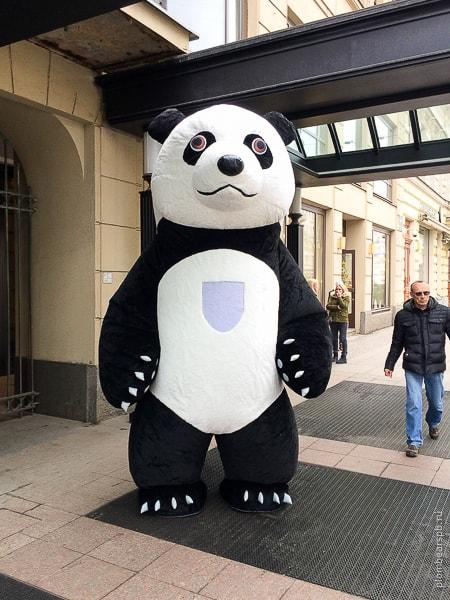 Гигант панда в центре Питера на Невском около Отеля Коринтия